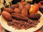 Шоколадное дерево, какао, сырье...